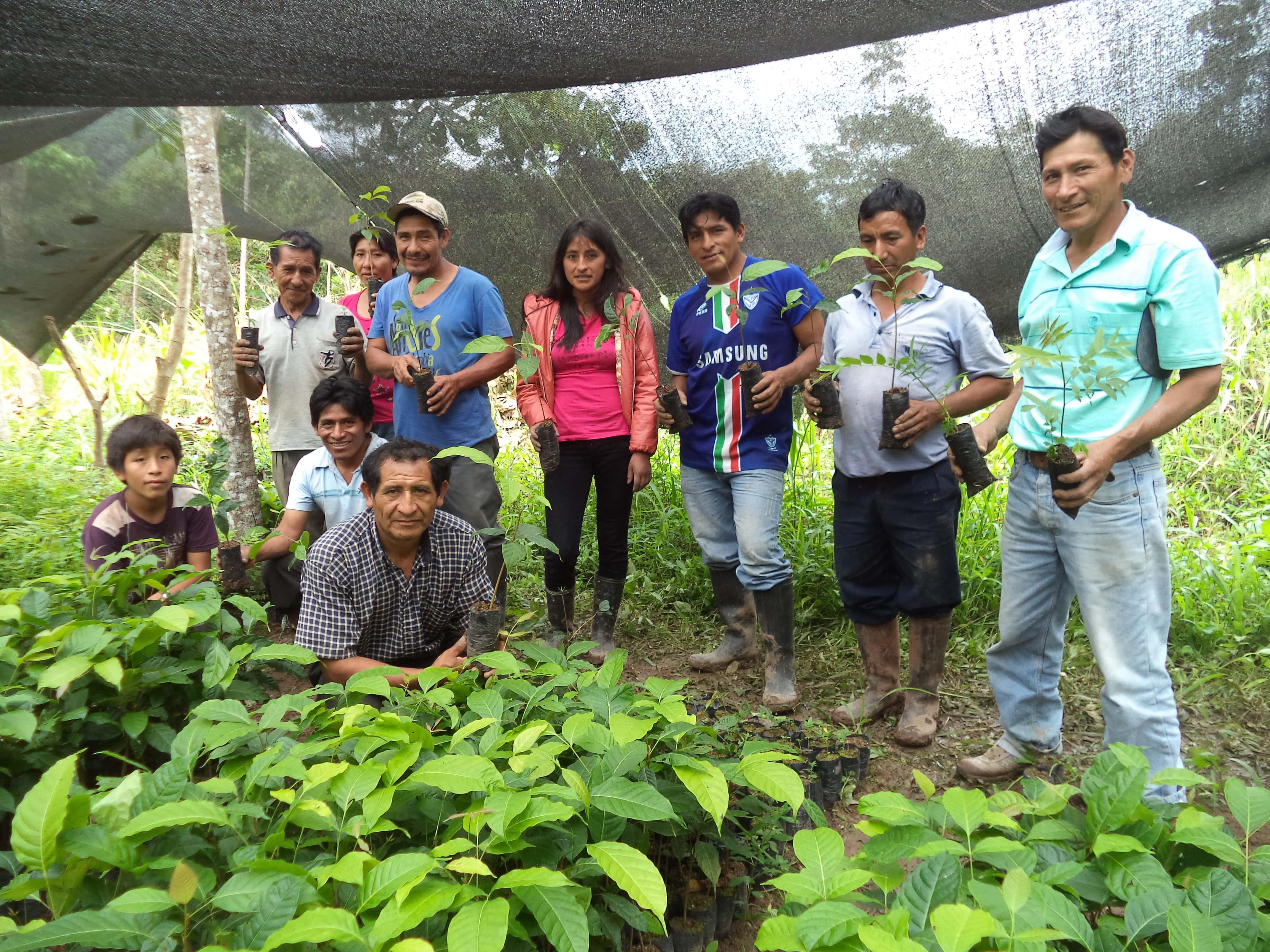 Agroforesterie en zone caféière et cacaoyère au Pérou  - es-es -> à traduire Image principale