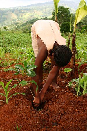 Garder le contrôle des semences en Haïtï Image principale