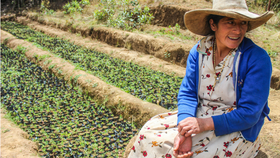 COP23 : l'agriculture peut aussi être la solution ! Image principale