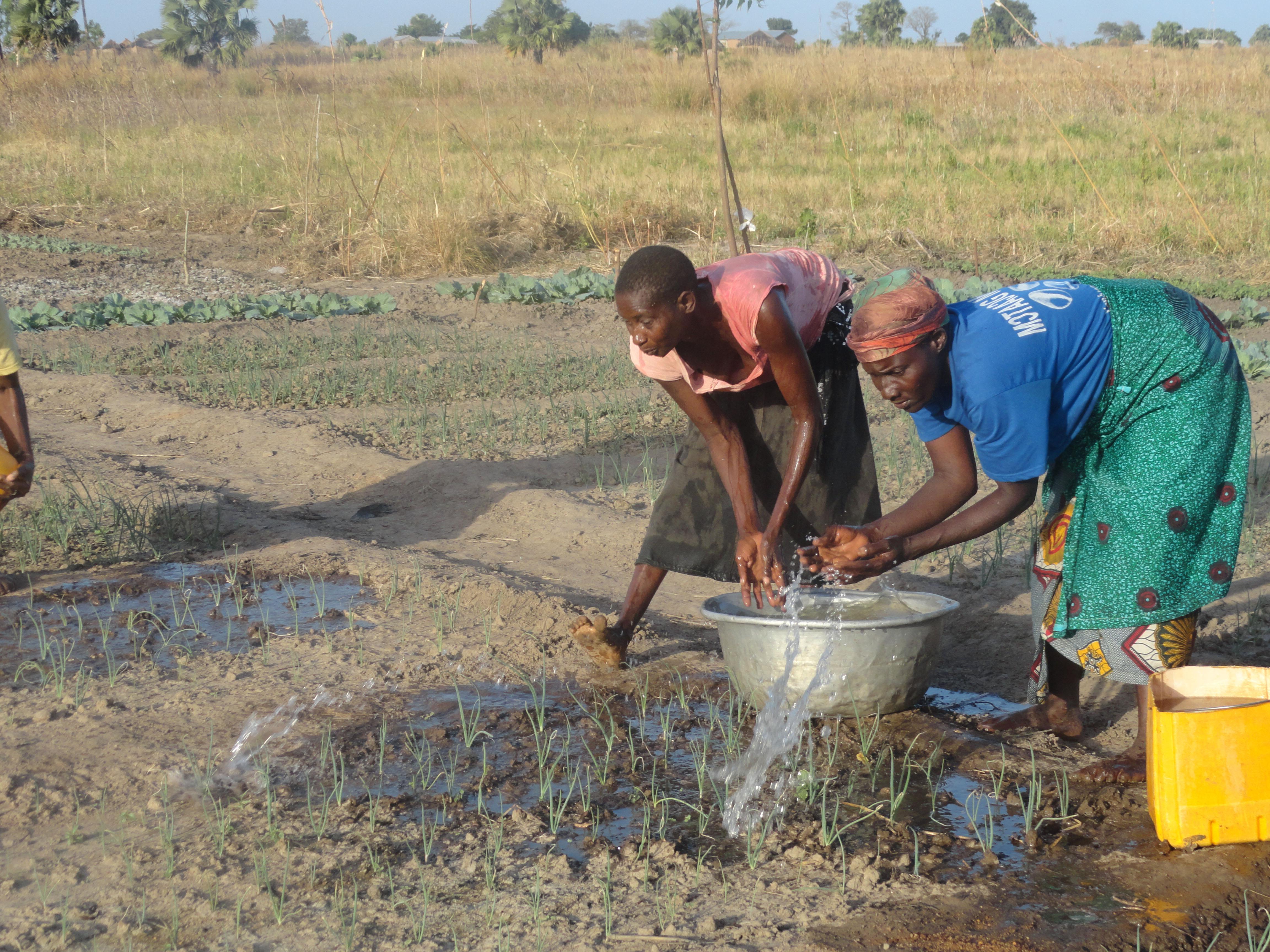 Intensification agroécologique dans les savanes du Togo Vignette