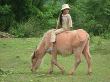 Elevages paysans à Yen Baï au Vietnam Vignette
