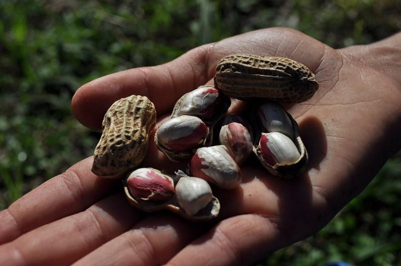 Agroécologie Parana (10).jpg