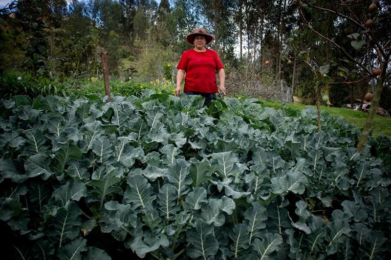 Agroecologia-Ecuador (6).JPG