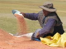 Mercados Campesinos Imagen