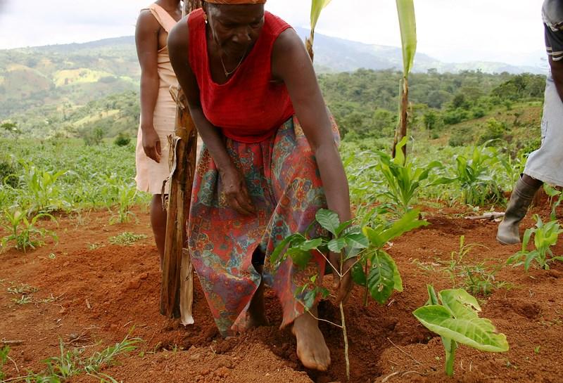 Femmes - Plantation d'un pied de cafe_6476395391_o.jpg