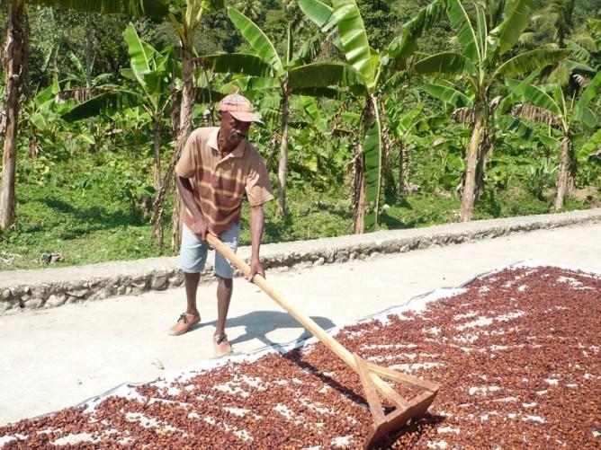 Comercio justo de cacao de calidad en el Norte de Haití Image principale