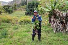 Desarrollo económico del territorio indio Pasto en Ecuador y Colombia Vignette