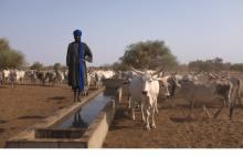 Ganadería pastoril en el  Norte Senegal Vignette