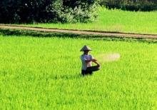 Ganaderias campesinas en el Norte del Vietnam Viñeta