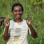 Cadenas alimenticias en  Madagascar Viñeta