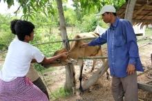 Sanidad y produccion animal en Camboya Viñeta