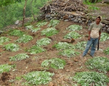 Seguridad alimentaria en Yamaranguila, Honduras Viñeta