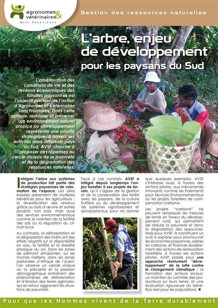 Thumbnail - L'arbre, enjeu de développement pour les paysans du Sud