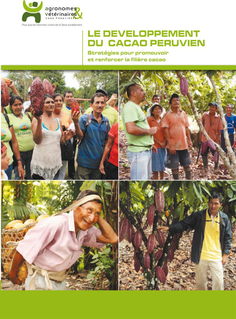 Le développement du cacao péruvien  : stratégies pour promouvoir et renforcer la filière cacao Image principale