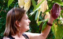 Le potentiel du cacao d'Haïti est très important Vignette