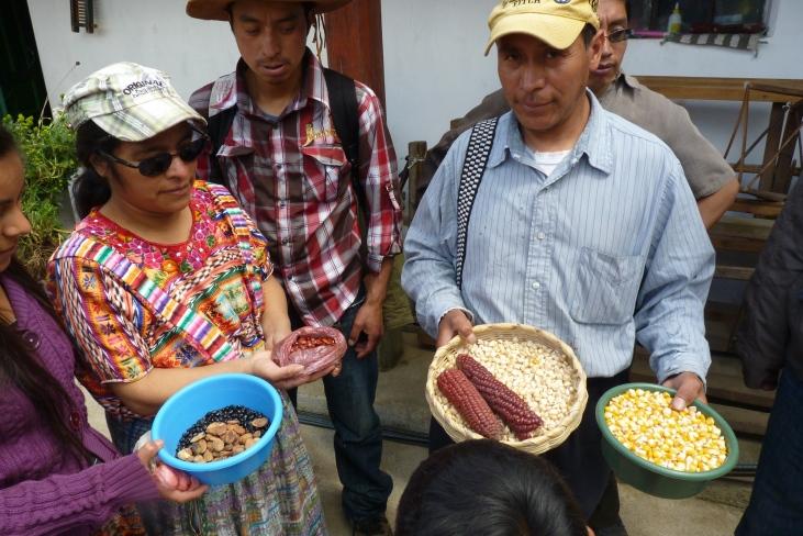 Gestion agroforestière au Guatemala Image principale