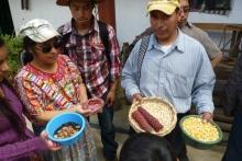 Gestión agroforestal en Guatemala Vignette
