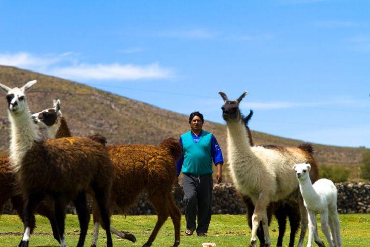 Autonomie et développement des territoires indiens en Bolivie Image principale
