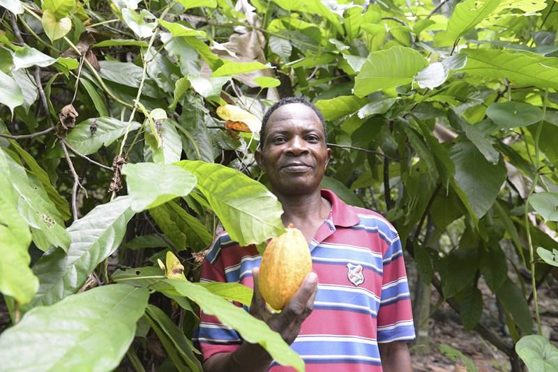 A Cap Haïtien, Jude Dorastin, président d'une coopérative cacaoyère, dans ses plantations de Cacao criollo (4).jpg
