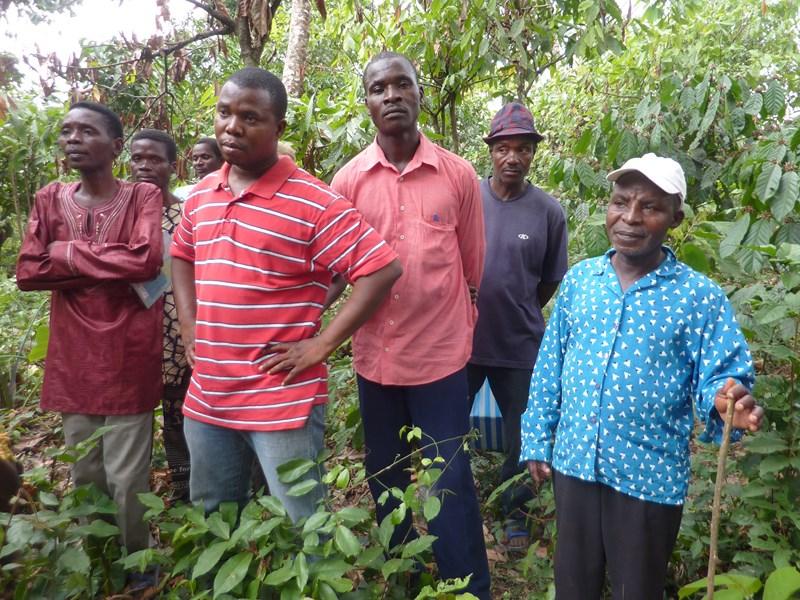 visite de plantation de cacaoyer.JPG