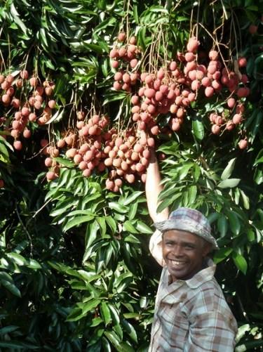 Quel est l'engagement et le rôle d'AVSF dans le secteur du commerce équitable ? Image principale