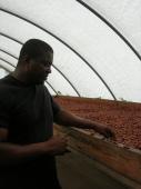 Le Programme d'approvisionnement Fairtrade : une initiative positive pour les petits producteurs organisés et le secteur du commerce équitable en France? Vignette