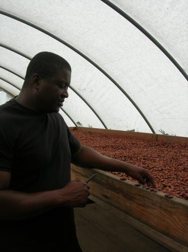 Le Programme d'approvisionnement Fairtrade : une initiative positive pour les petits producteurs organisés et le secteur du commerce équitable en France? Image principale