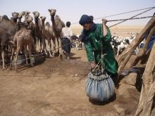 AVSF vous invite à un Forum et une Table ronde sur le Sahel Vignette