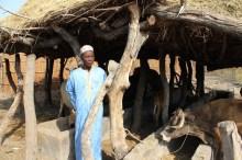 Au Sénégal, les coopératives laitières fournissent un revenu pérenne pour les familles Vignette