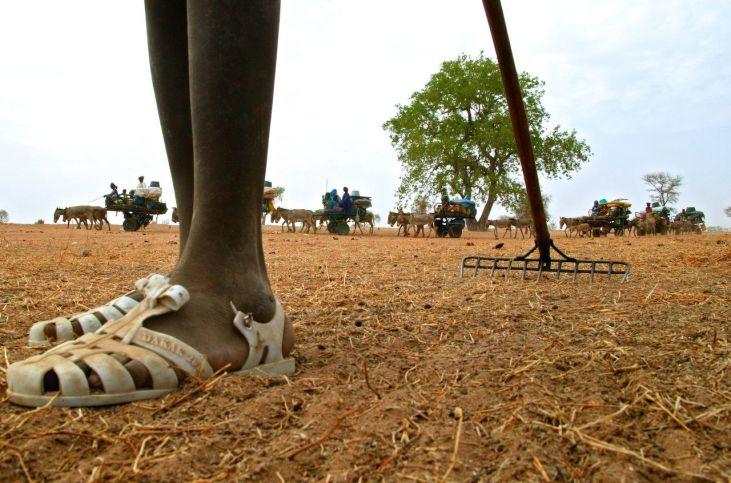"""AVSF mobilisé contra la nouvelle """"Alliance"""" pour la sécurité alimentaire en Afrique Image principale"""