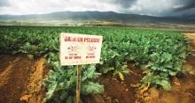 Moins de pesticides et plus de rendement Vignette