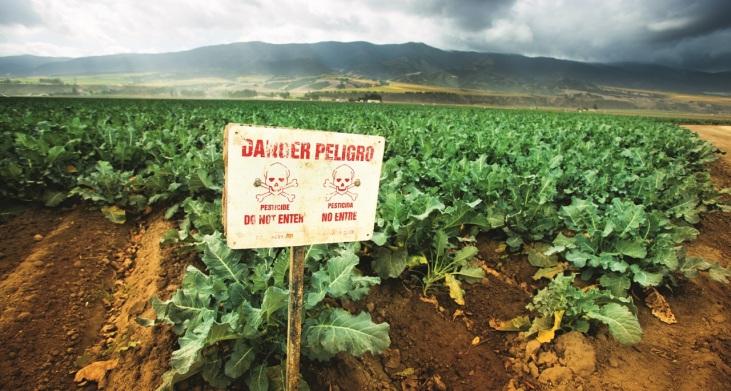 Moins de pesticides et plus de rendement Image principale