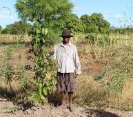 Sécurité alimentaire dans le Sud-Ouest de Madagascar Vignette