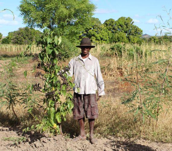 Sécurité alimentaire dans le Sud-Ouest de Madagascar Image principale