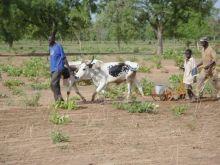 Mali : Action d'urgence, de résilience, de développement ? Vignette