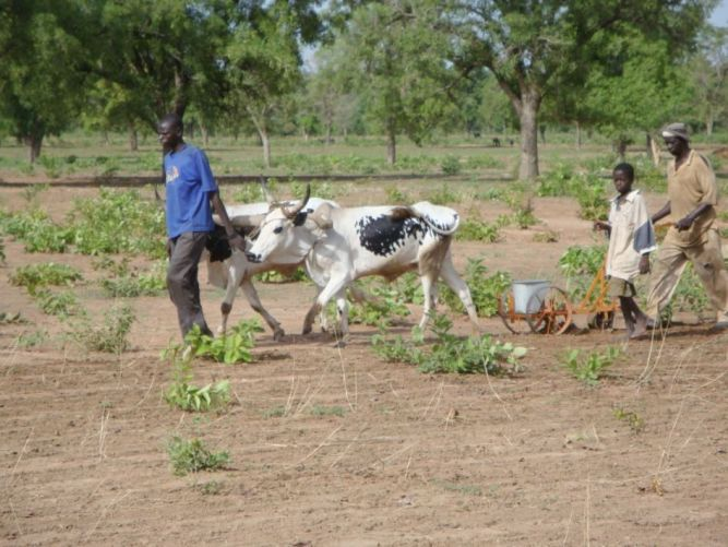 Mali : Action d'urgence, de résilience, de développement ? Image principale