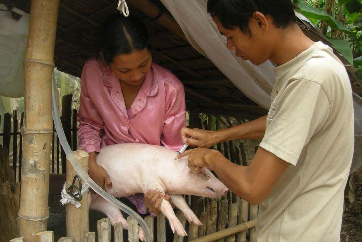 """Séminaire """"Les services de santé animale de proximité"""" Image principale"""