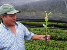 Revenus en plus, CO2 en moins au Pérou Vignette