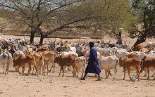Alerter les éleveurs sénégalais Vignette