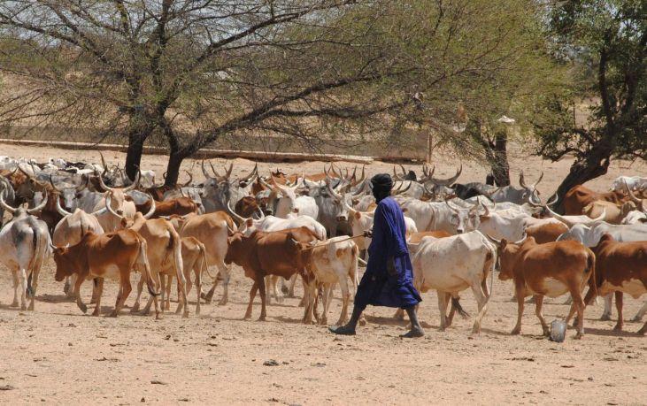 Alerter les éleveurs sénégalais Image principale
