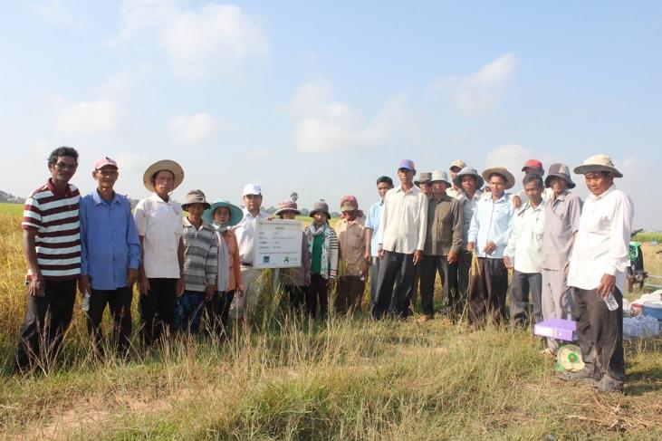Une filière rizicole mieux structurée au Cambodge Image principale
