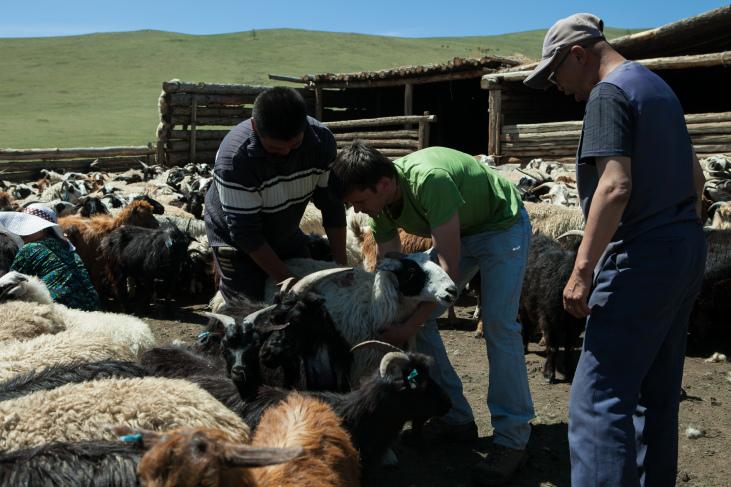 Santé animale sur les hauts plateaux mongols Image principale