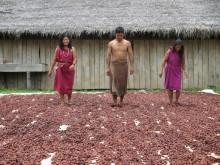 Des coopératives paysannes de cacao performantes au Pérou Vignette