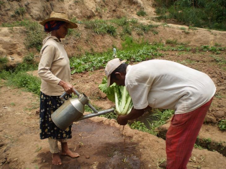 Sécurité alimentaire à Amboasary et Tsihombe à Madagascar  Image principale