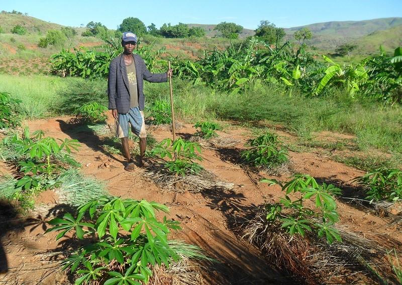 Madagascar_Manioc_Basket_compost.jpg