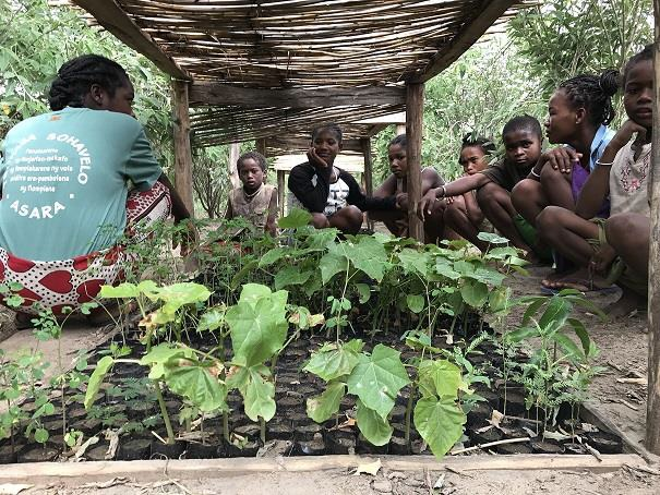 Madagascar_SOHAVELO_jeunes_plants.jpg