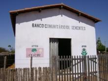 Des maisons pour stocker les semences de maïs au Brésil Vignette