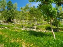 Agroécologie et agroforesterie dans le Sud-Est d'Haïti Vignette