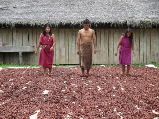 Des coopératives paysannes de cacao performantes au Pérou Image principale