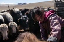 La tradition sauve le futur en Mongolie Vignette